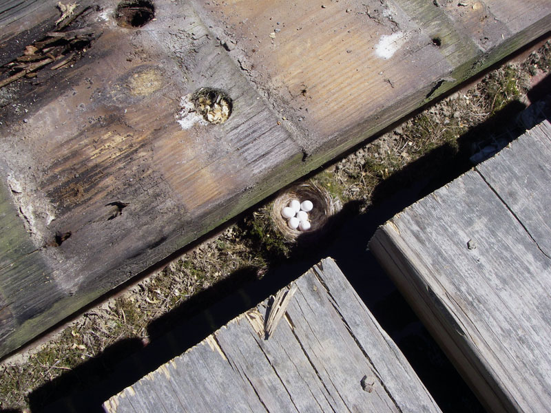 old deck with bird nest