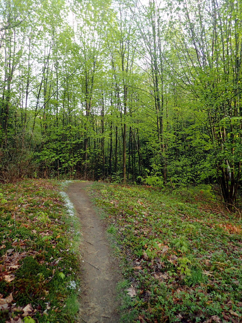 trail with green trees