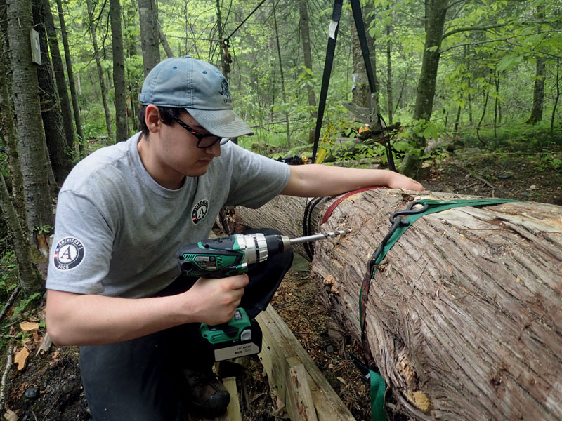 Americorps member assembles log bridge